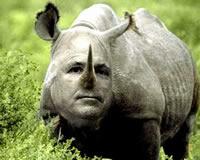 John McCain RINO