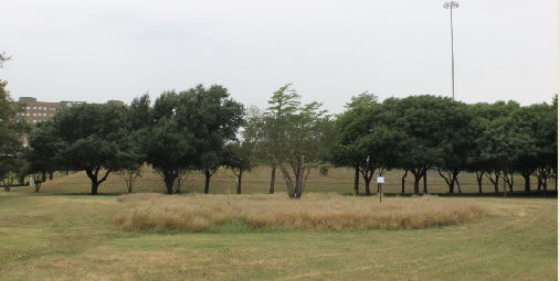 Ground level view of Martyr's Park in Dallas, TX
